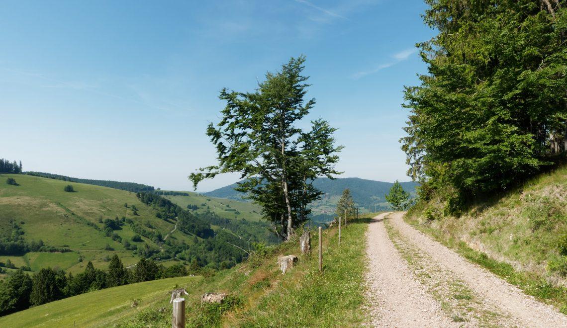 Einfacher Wanderweg im Süd-Schwarzwald für kurze Spaziergänge oder als Teil einer großen Wanderung geeignet