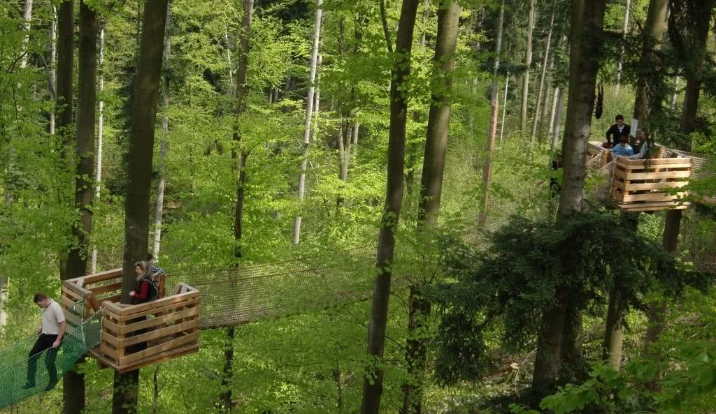 Baumkronenweg in Waldkirch