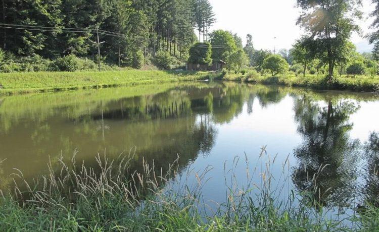 Kleiner See in Winden im Elztal - Scharmattensee