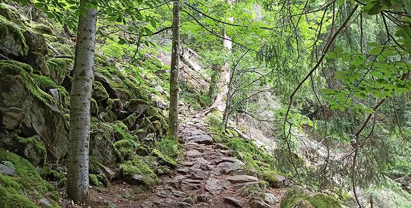 Abstieg zu den Zweribach Wasserfällen