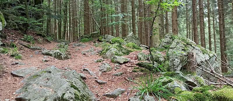 Felsiger Waldweg auf der Hörnleberg Tour