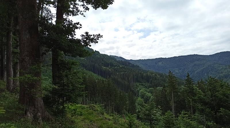 Aufstieg vom Erzenbach in Oberwinden aus
