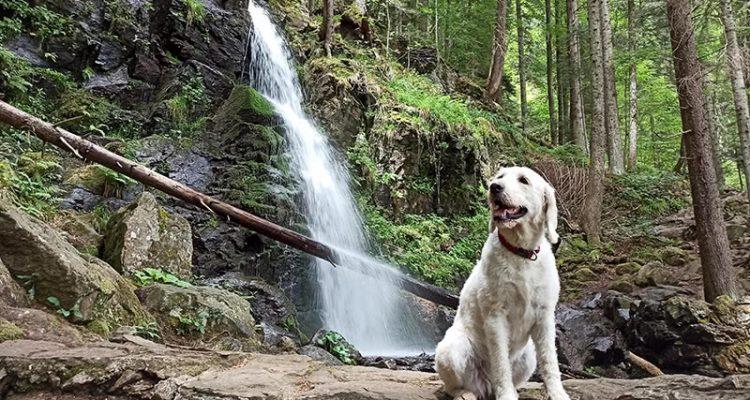 Mila an den Zweribach Wasserfällen