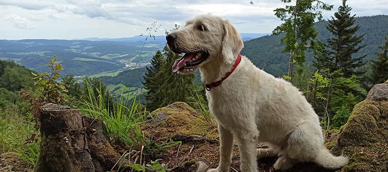Mila mit Aussicht auf der Hörnleberg Wanderung