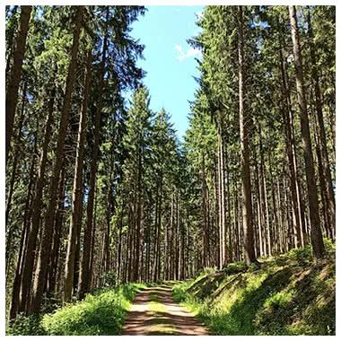 Waldwanderweg Schwangeneckwanderung in Winden im Elztal