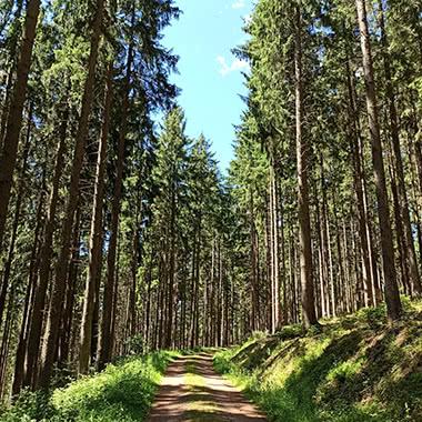 Waldwanderweg Schwangeneck Tour