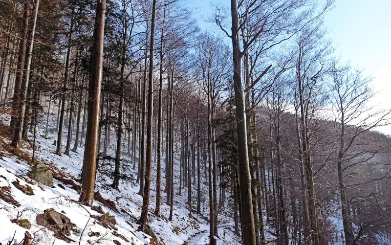 Winterwald bei Sonnenschein am Kandel
