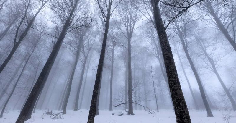 Winterwald am Nordhang des Kandel-Seitengipfels