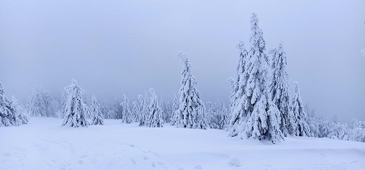 Schneelandschaft am Feldberg Panoramaweg
