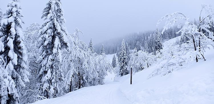 Schneebedeckter Wanderweg am Feldberg